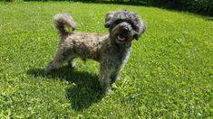 Bist du ein schlechter Hundehalter? Merlin, Dogs, Animals, Poor Dog, Stress Relief, Vet Office, Wizards, Diary Book, Tips And Tricks