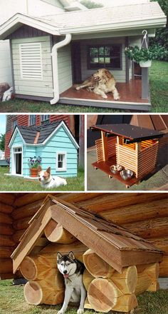 The teal dog house! Pallet Dog House, Pallet Dog Beds, Dog House Bed, Dog House Plans, Modern Dog Houses, Cool Dog Houses, Luxury Dog House, Dog Spaces, Dog Rooms