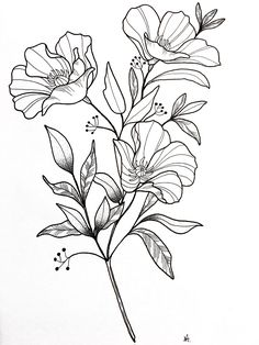 42 Simple and Easy Flower Drawings for Beginners - Cartoon District Easy Flower Drawings, Beautiful Flower Drawings, Flower Sketches, Art Sketches, Botanical Line Drawing, Floral Drawing, Hibiscus Drawing, Botanical Drawings, Art And Illustration