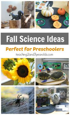 Preschool Science Ideas for Fall - 5 hands-on activities from Teaching 2 and 3…