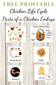 Join to download free printables for preschool children with parts of a children embryo and chilcken life cycle poster, 3 part cards and blackline master. Chicken Life, Free Chickens, Blog Love, Life Cycles, Early Childhood, Montessori, Painted Furniture, Free Printables, Preschool