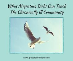 There is truly something migrating birds can teach the chronically ill community. Their V formation has two main purposes.. Read how these purposes can teach something to the chronic illness community.