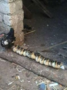 Pure Nature ~ Duck Army :)