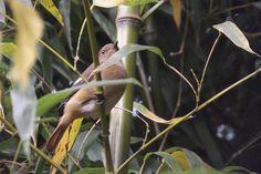 A bird living in the bamboos forest of the Beomeosa Temple - #Busan #SouthKorea #Bird #bamboo