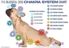 """Salutations to the sun! Nose, ear, tail and paw chakras? Check out the """"secondary"""" #dog #chakra system! The Blissful Dog ht.ly/xFQSy Thanks for the forward June!"""