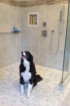 one level doorless shower Open design bathroom remodel in Cleveland Ohio Ada Bathroom, Handicap Bathroom, Mold In Bathroom, Design Bathroom, Bathroom Remodeling, Bathroom Ideas, Bathroom Makeovers, Budget Bathroom, Master Bathroom