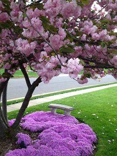 Purple flowers surrounding gorgeous blossom tree #flowerbed #flowerpot #planter #gardens #gardenideas #gardeningtips #decorhomeideas