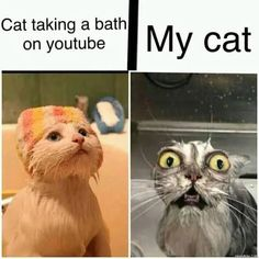 find more at TopGoss #meme #funny #dank Best Dad Jokes, Knock Knock Jokes, Best Memes Ever, Funny Picture Jokes, Bonnie N Clyde, Youtube I, Cat Life, Funny Images, Laugh Out Loud