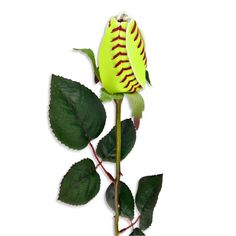 Softball Rose - wouldnt this be cute for Senior day gifts?