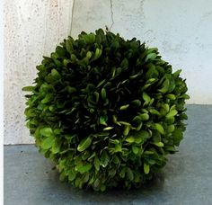Preserved Boxwood Balls 8 Inch