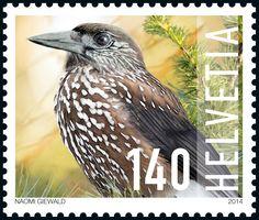 Suiza 2014 - El Cascanueces Manchado (Nucifraga caryocatactes) es un pájaro que…