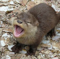 """Otter: """"Haha! I LOVE your jokes! Please tell me another..."""""""