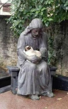 PetsLady's Pick: Cute Cat Of Our Lord Of The Day...see more at PetsLady.com -The FUN site for Animal Lovers