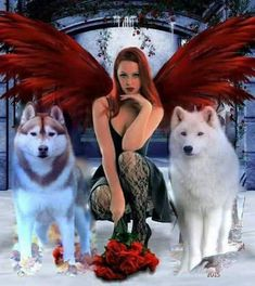The Swiss shepherd Wolf Pictures, Angel Pictures, Beautiful Wolves, Beautiful Fairies, Wolf Spirit, Spirit Animal, Wolves And Women, Fantasy Wolf, Kobold