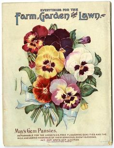 Copies Of Many Catalogs From L May Co A Renowned Grower Hardy Northern Seeds
