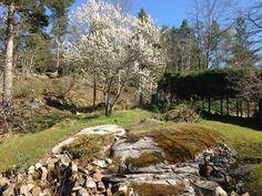Lindholm Garden-Mina mossiga idéer: Höstens sista inköp och sista planteringsprojekt