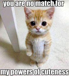 kitty has cuteness powers
