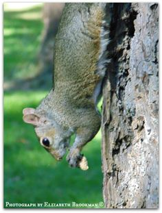 squirrel on tree eating a peanut