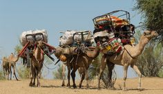 Toubou nomads moving camp, Tibesti, Chad, Moving camp by John Downey on 500px