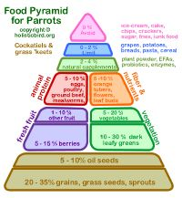 Parrot food pyramid- percentages of which types of foods....I never knew a bird pyramid existed till now :-)