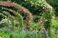 Monet's garden (Giverny) by HervelineG