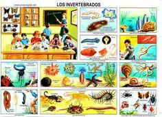 laminas escolares para imprimir mexico - Buscar con Google