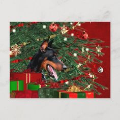 Doberman pinscher Christmas Holiday Postcard doberman puppy blue, doberman pinscher black, beautiful doberman pinscher #dobermanpuppy #dobermanoftheday #dobermangang, back to school, aesthetic wallpaper, y2k fashion