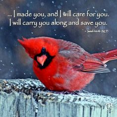 Isaiah thank you dad I did ask you for a picture of a cardinal today so I know your with me. Thank you love you DAD. Quotes Flying, Bible Scriptures, Bible Quotes, Healing Scriptures, Scripture Verses, Lyric Quotes, Funny Bird, Isaiah 46 4, Psalm 46