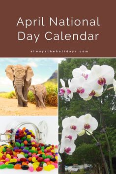 Save the Elephants Day, National Jelly Bean Day and National Orchid Day are just three of the national days in April. Find out the rest on Always the Holidays. #nationaldays #calendar List Of National Days, Elephant Day, National Day Calendar, Save The Elephants, Days Of The Year, Jelly, Orchids, Rest, Holidays