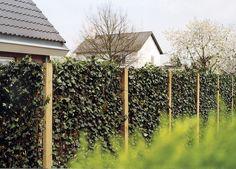 Zelená stena Mobilane – ohradenie živého plotu-Zelená stena Mobilane - Bezpečné živé ploty