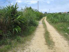 Sugar cane fields in Yomitan #Okinawa