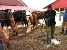 Donn Hewes of the Essex Farm Institute with draft horses, breaking it down for the next generation on a cold muddy day.