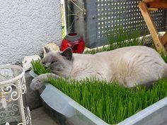 Grasinsel aus Rasen für Wohnungskatzen - Seite 4 - Katzen Forum