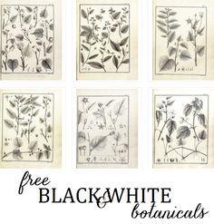 (Free) Black And White botanical prints