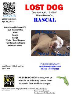Lost Dog - American Bulldog - Opa-locka, FL, United States