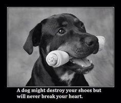 shoes, anim, dogs, pet, doggi, dog quotes, true, puppi, friend