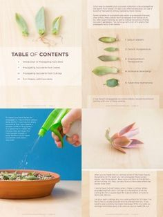 Sample pages from The Secrets to Propagating Succulents