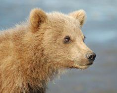 M.T. Bears