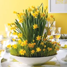 Yellow Daffodils Use daffodil plants as a cheery Easter decorating idea or as an Easter hostess gift.Yellow Daffodils Use daffodil plants as a cheery Easter decorating idea or as an Easter hostess gift. Fresh Flowers, Yellow Flowers, Spring Flowers, Beautiful Flowers, Yellow Plants, Deco Floral, Arte Floral, Ikebana, Daffodils Planting