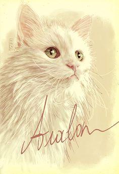 My Turkish Van cat Avalon immortalized by Gilles Vranckx / cat art / cat painting / cat illustration