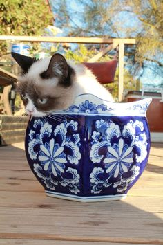 Wanted to be in this bowl...now I hate it. *