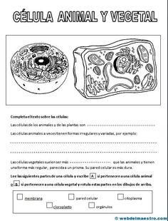 La célula animal y vegetal States Of Matter, Classroom Labels, Science, Biology, Anatomy, Homeschool, Medicine, Teaching, Nature