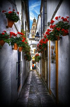 Flowers street, Cordoba, Spain by noelle Places Around The World, The Places Youll Go, Places To See, Around The Worlds, Wonderful Places, Great Places, Beautiful Places, Beautiful Streets, Beautiful World