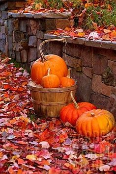 Citrouille - Autumnal pumpkin display with leaves against a rock wall. Autumn Day, Autumn Leaves, Red Leaves, Autumn Nature, Autumn Garden, Hello Autumn, Autumn Scenes, Happy Fall Y'all, Fall Pictures