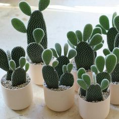 """If Mickey Mouse were a cactus"