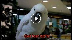 Funny Rude Talking Parrot – Funny Cockatoo Funny Talking 163096d006