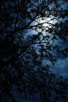 Moonlit Night ~ Artist: Mario Morales Rubí