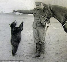 Winnipeg (Winnie - the inspiration for A. Milne's Winnie the Pooh) became an unofficial mascot of Lieutenant Colebourn's regiment, the Canadian Infantry Brigade, as they trained on the Salisbury Plain Canadian Soldiers, Charlie Bears, Canadian History, Old Photographs, Pooh Bear, Animal Pictures, Time Pictures, Historical Photos, Winnie The Pooh