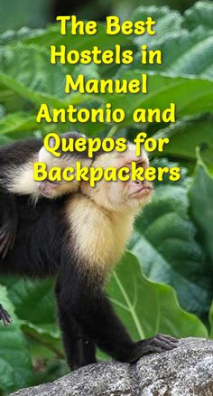 The Best Hostels in Manuel Antonio and Quepos for Backpackers: Manuel Antonio National Park and the nearby town of Quepos are among the…