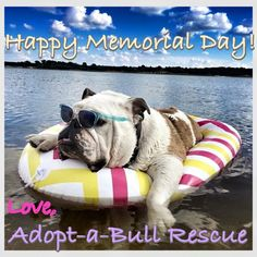 ❤ Bullie-lazing. IF you are in NW Washington/Seattle/Tacoma etc --- there are 2 GREAT Bulldog Rescues. Always needing Foster Homes, Resources & of course --- they have beautiful bully babies that are looking for ~ forever homes! The life you say could be your own. contact Bulldog Haven NW or Pacific Northwest Bulldog Rescue ❤